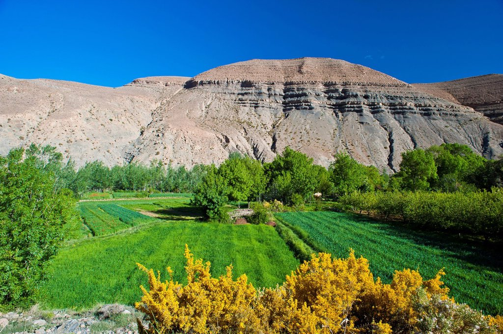 Stock Photo: 1848-690237 Typical landscape in the valley of the Dades River, cultivated fields of the Berbers, upper Dades Valley, High Atlas mountain range, Morocco, Africa