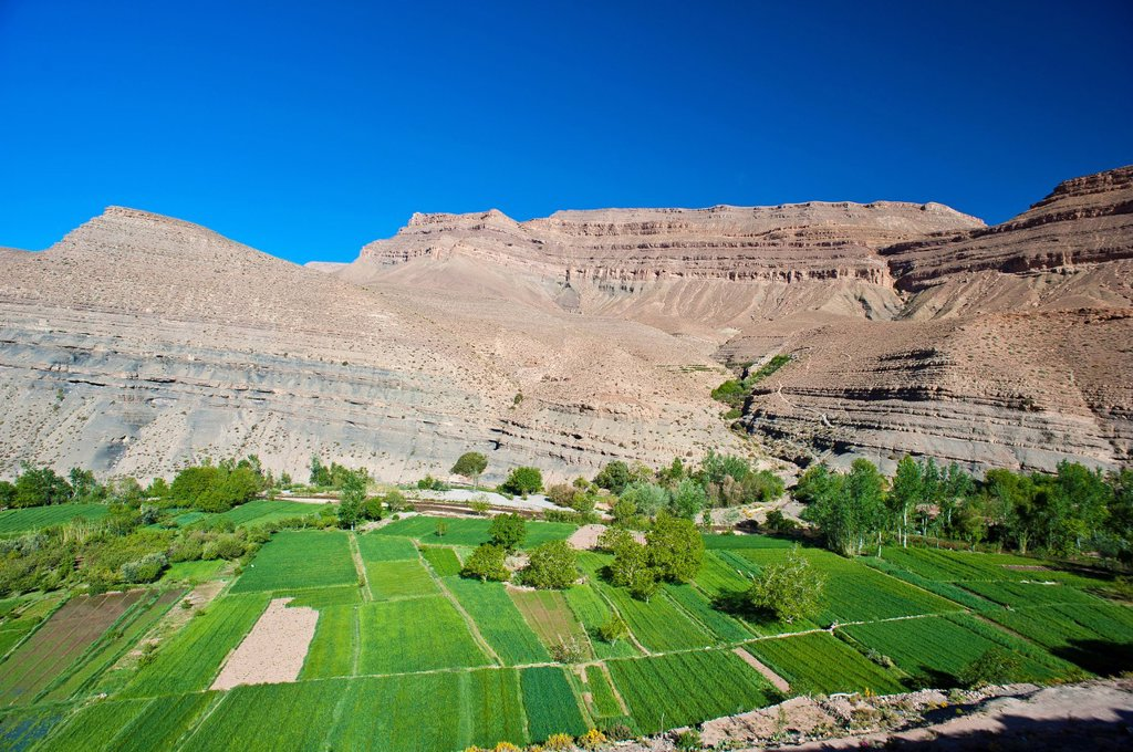 Stock Photo: 1848-690238 Typical landscape in the valley of the Dades River, cultivated fields of the Berbers, upper Dades Valley, High Atlas mountain range, Morocco, Africa