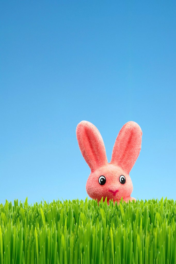 Easter bunny, Easter decoration, green grass, blue sky : Stock Photo