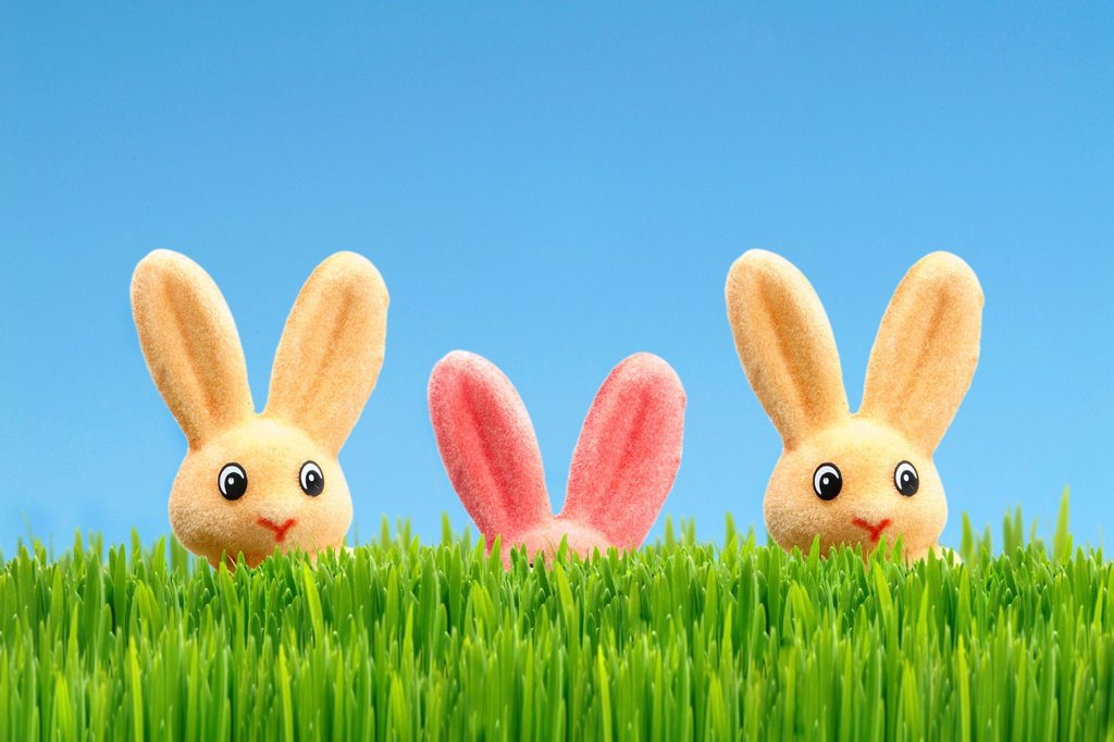 Three Easter bunnies, one is hiding, Easter decoration, green grass, blue sky : Stock Photo
