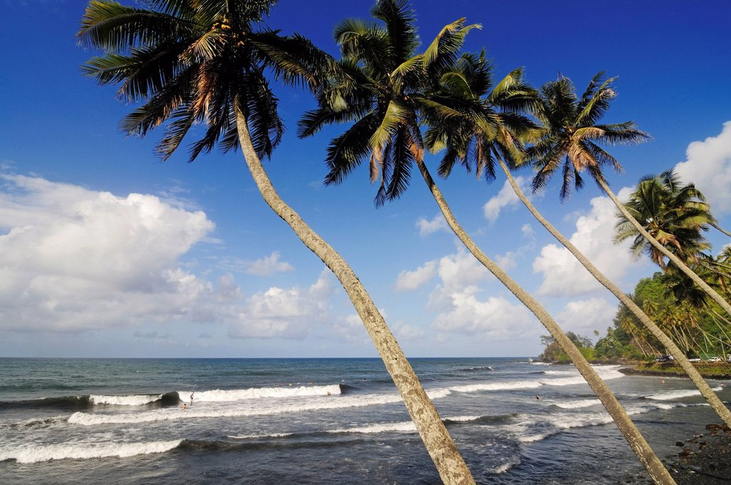 Stock Photo: 1848-690928 Palm trees at the beach, Mahina Venus Point, Tahiti, Society Islands, French Polynesia, Pacific Ocean