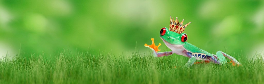 Frog wearing a golden crown sitting on the grass, waving, illustration : Stock Photo