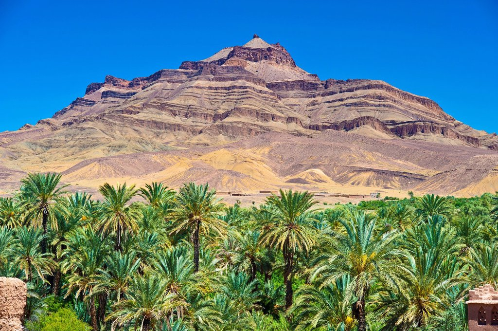 Date palm trees Phoenix in a palm grove in front of the Djebel Kissane mountain, Draa_Valley, Southern Morocco, Morocco, Africa : Stock Photo