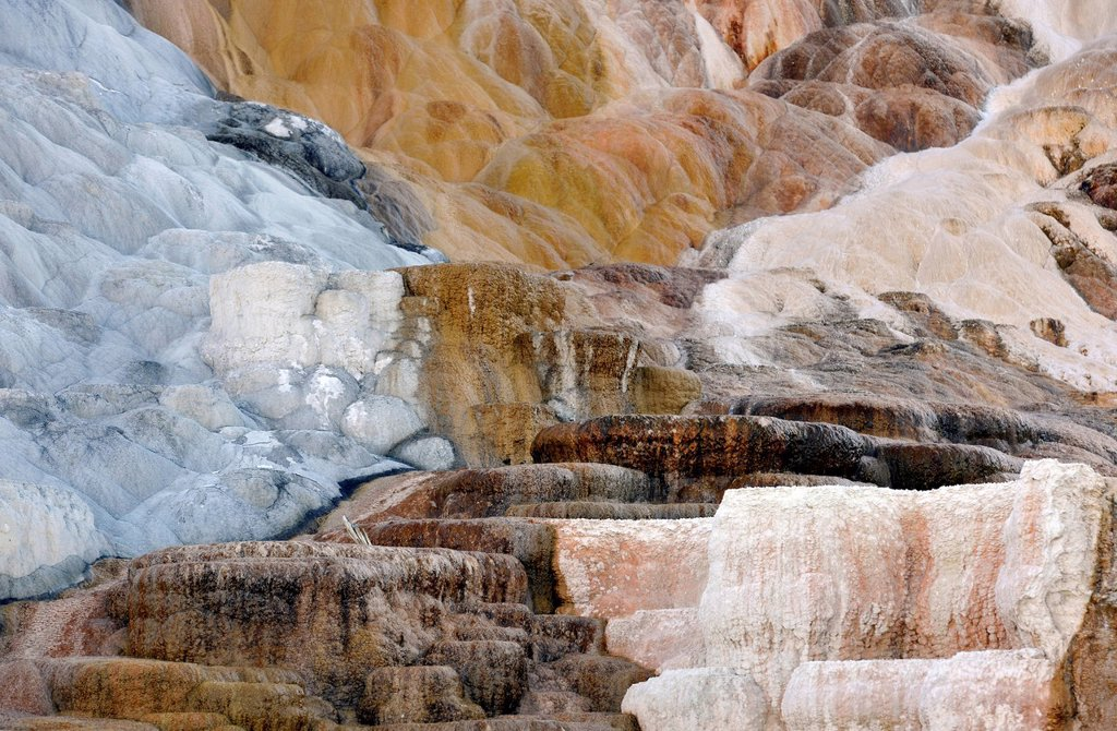 Stock Photo: 1848-695875 Palette Spring Terrace, Lower Terraces, limestone sinter terraces, geysers, hot springs, colourful thermophilic bacteria, Mammoth Hot Springs Terraces, Yellowstone National Park, Wyoming, United States of America