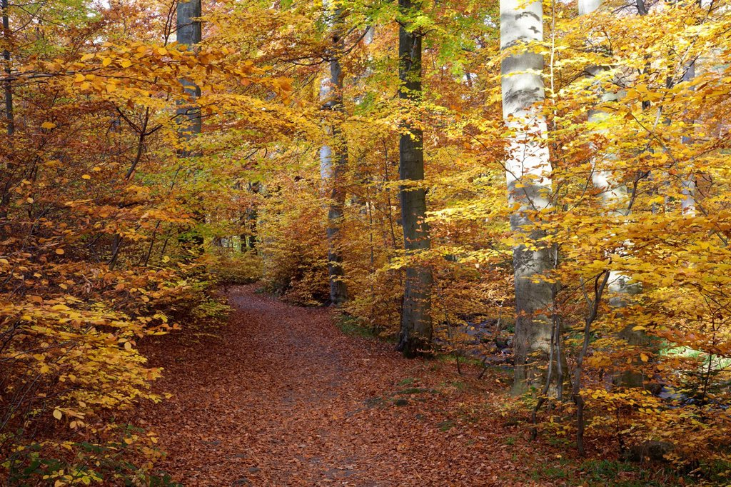 Heinrich_Heine hiking trail in autumn, Ilsetal valley, Ilsenburg, Harz region, National Park Harz, Saxony_Anhalt, Germany, Europe, PublicGround : Stock Photo