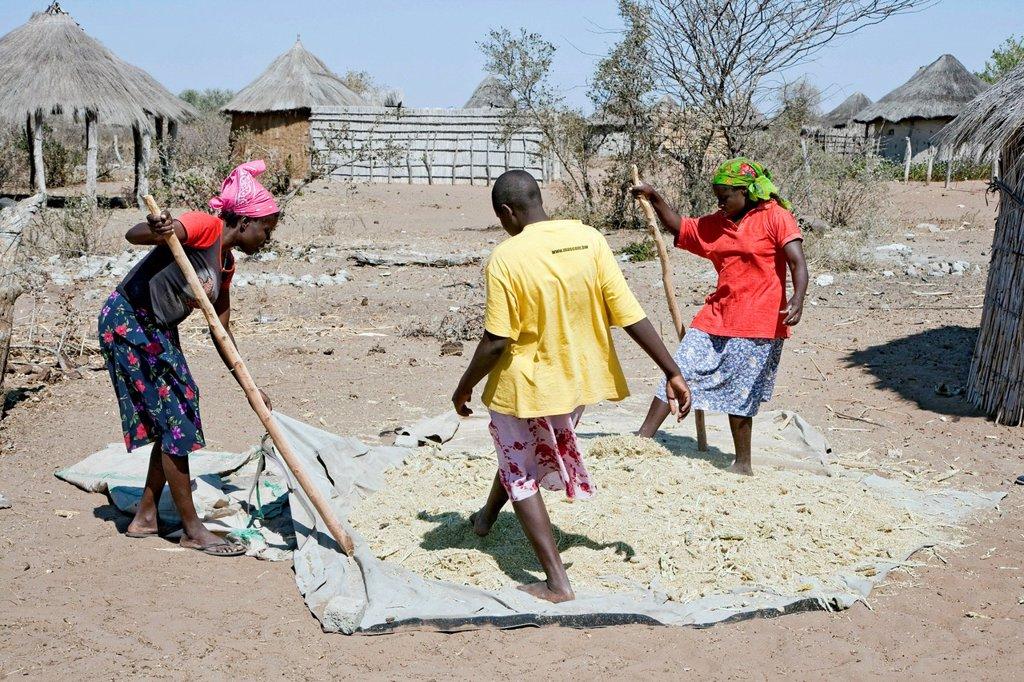 Stock Photo: 1848-697347 Women working in a village near the Tsodilo Hills, Botswana, Africa