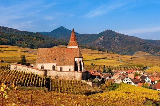 Autumnal vineyards around the church of Hunawihr, Alsace, France, Europe : Stock Photo