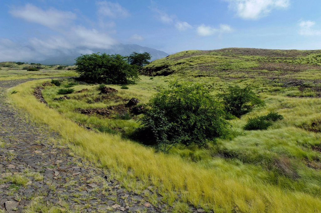 Stock Photo: 1848-699912 Landscape on the south coast, Fogo, Cape Verde, Africa