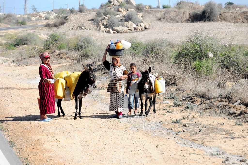 Moroccan family with donkeys on the road to Essaouira, Morocco, North Africa, Africa : Stock Photo