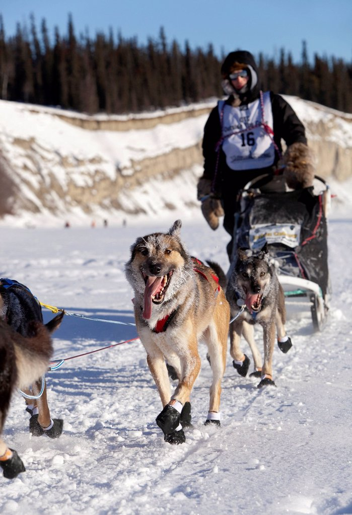 Stock Photo: 1848-714419 Running dog team, sled dogs, mushing, Alaskan Huskies, young First Nation musher Josh Cadzow at the start of the Yukon Quest 1, 000_mile International Sled Dog Race 2011, ice of frozen Takhini River, Yukon Territory, Canada