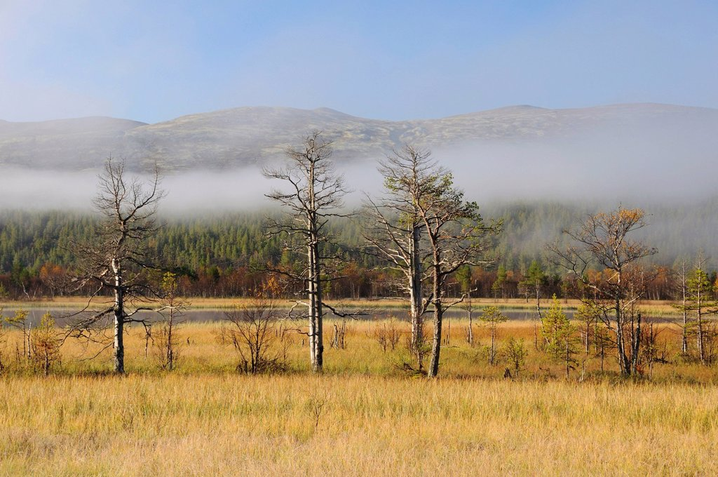 Marshy landscape covered with mist, Rondane National Park, Norway, Europe : Stock Photo