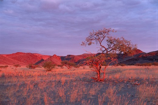 Stock Photo: 1848-72073 Sunset over the mountains, Damaraland, Namibia, Africa