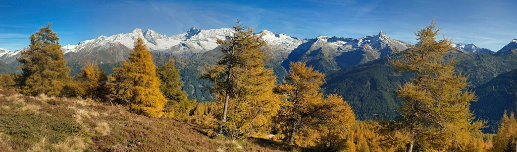 Stock Photo: 1848-721054 Laerchenwiesen larch meadows, in front of the Olperer, Fussstein, Schrammacher, Sagwandspitze, Vinaders and Obernberg Mountains, Tyrol, Austria, Europe