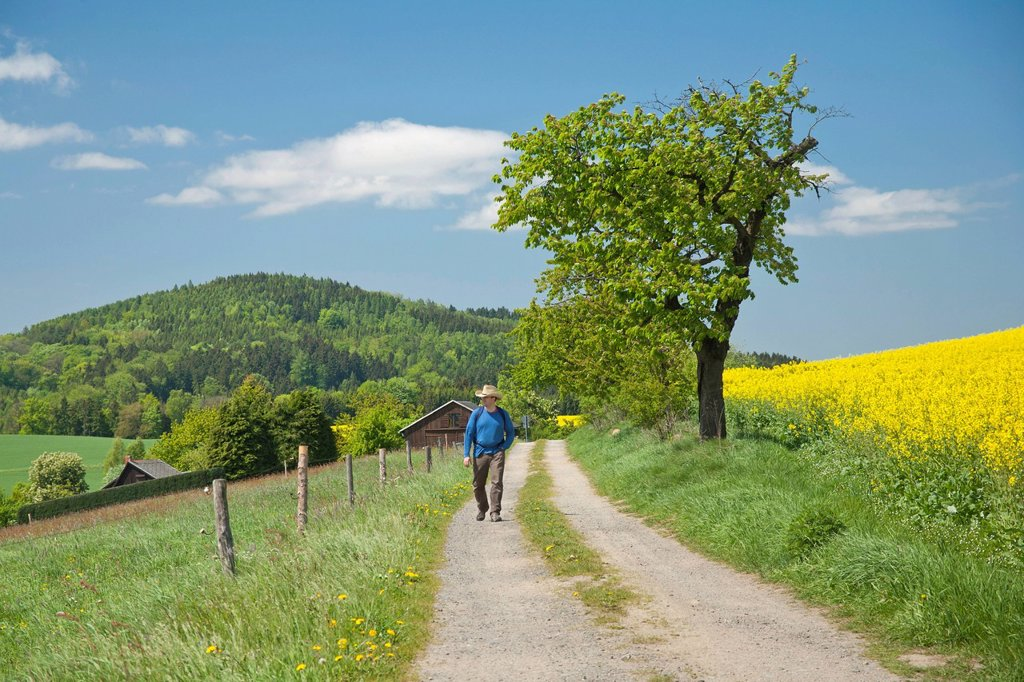 Hiker on a dirt road in Gossdorf, looking towards Gickelsberg Mountain, Saxon Switzerland, Saxony, Germany, Europe : Stock Photo