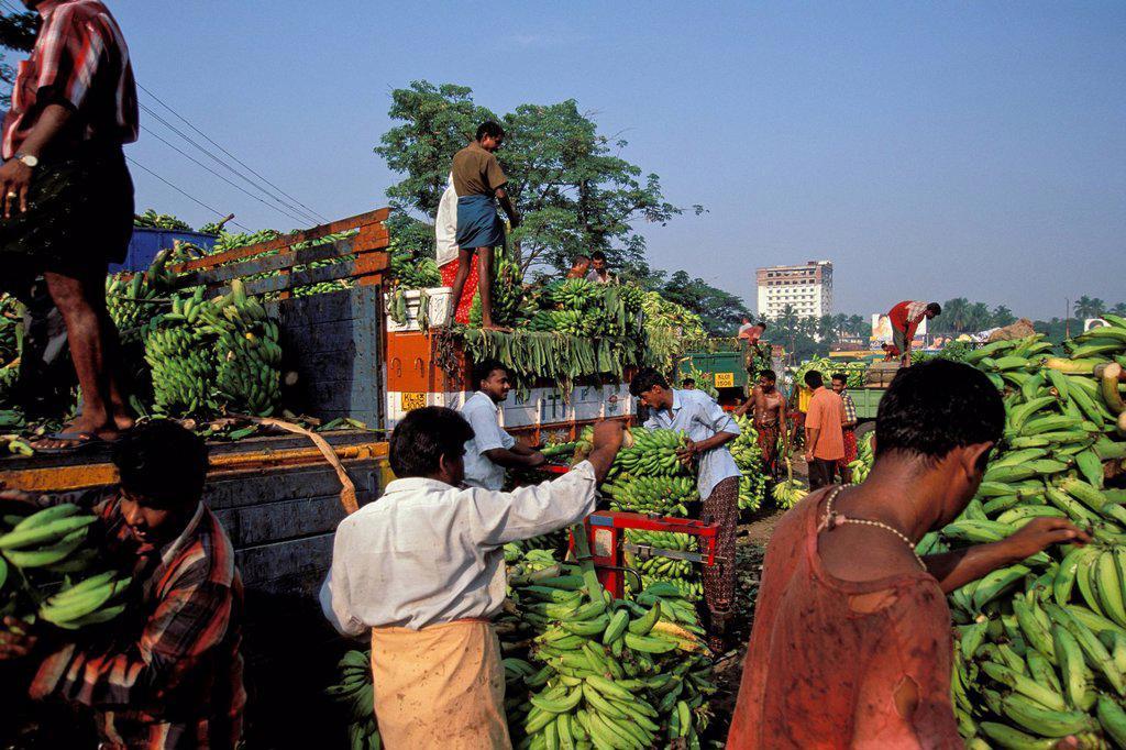 Stock Photo: 1848-722647 Banana being loaded at the banana market, Thrissur, Kerala, South India, Asia