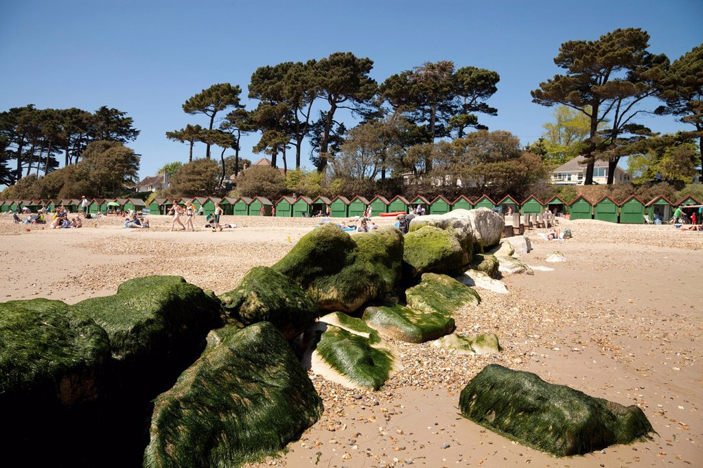Stock Photo: 1848-722888 Seaweed covered stone groyne sea defence with green beach huts and pine trees, Mudeford, Dorset, England, United Kingdom, Europe