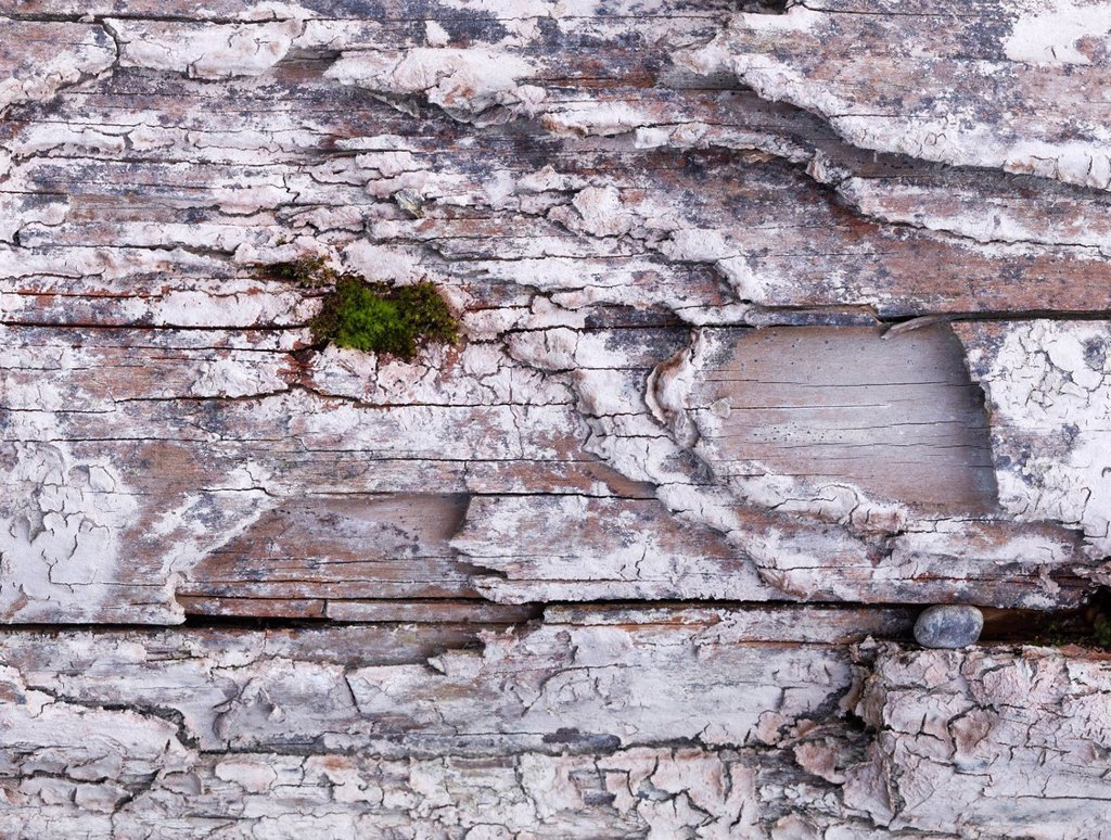 Stock Photo: 1848-724290 Green in the gray, moss on an old wooden sleeper, Lech, Augsburg, Swabia, Bavaria, Germany, Europe