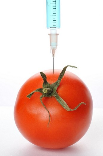 Stock Photo: 1848-72658 Syringe in a tomato, symbolic for genetically manipulated foods