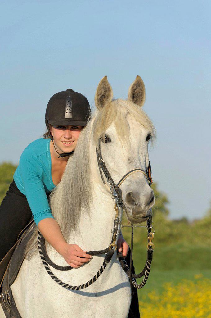 Young girl rider on horseback, Paso Fino mare, Bavaria, Germany, Europe : Stock Photo