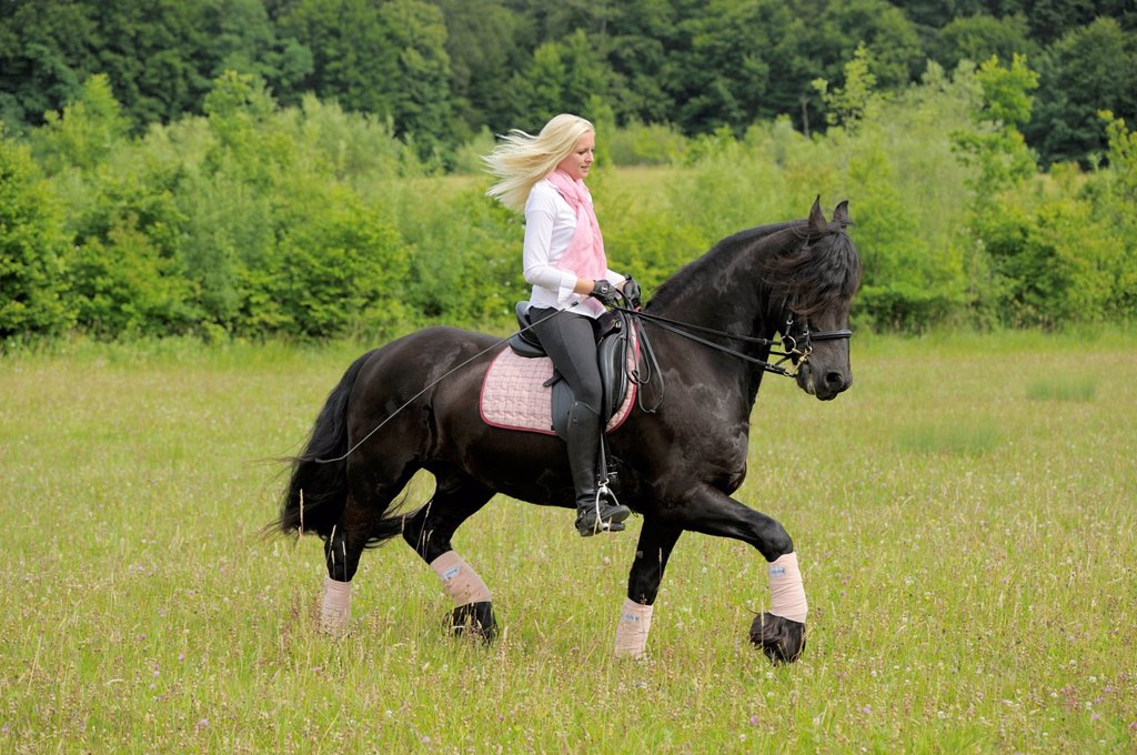 Young woman, 19 years, on horseback, Friesian horse, trotting on a meadow, Bavaria, Germany, Europe : Stock Photo