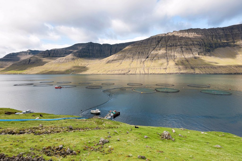 Fish farming in the fjord, Faroe Islands, Denmark, Northern Europe, Europe : Stock Photo