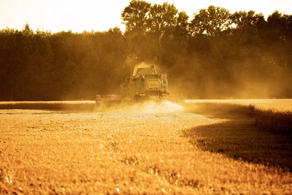 Stock Photo: 1848-730953 Combine harvester harvesting a field