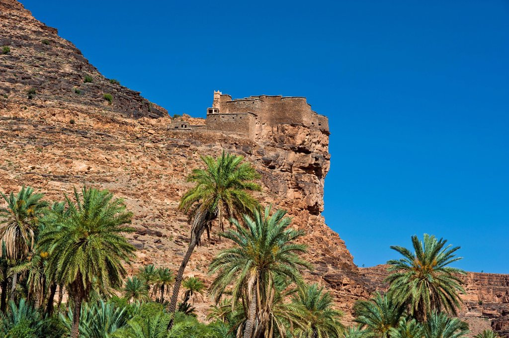 Agadir Aguelluy, fortified castle on a crag, date palms Phoenix at front, Amtoudi, Anti_Atlas or Lesser Atlas mountain range, southern Morocco, Morocco, Africa : Stock Photo