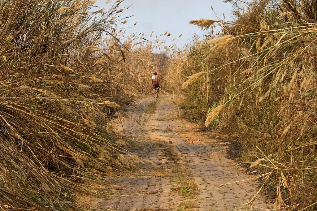 Man walking on a stone path up a hill, reeds overgrowing the path, Boga Lake, Chittagong Hill Tracts, Ruma Bazar, Bangladesh, South Asia : Stock Photo