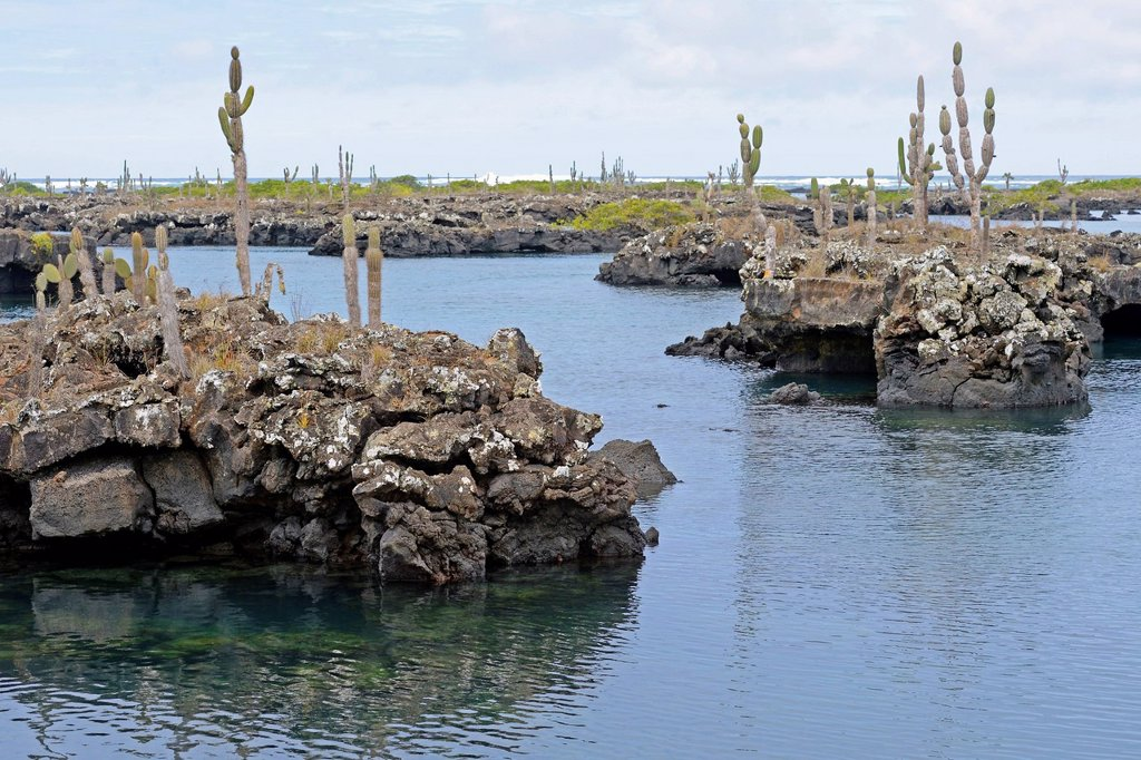 Stock Photo: 1848-743401 Area of Los Tuneles with lava formations and bridges, southwestern tip of Isabela Island, Galapagos Islands, UNESCO World Heritage Site, Ecuador, South America