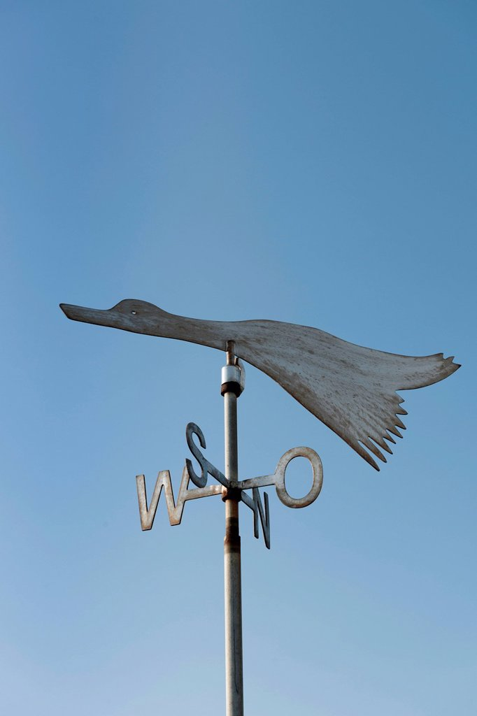 Migratory bird as a weather vane, small island of Langeness, North Frisia, Schleswig_Holstein, northern Germany, Germany, Europe : Stock Photo