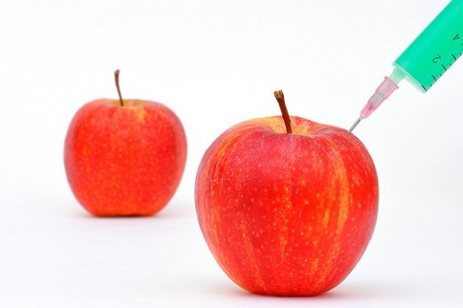 Apples with a syringe, genetic engineering : Stock Photo