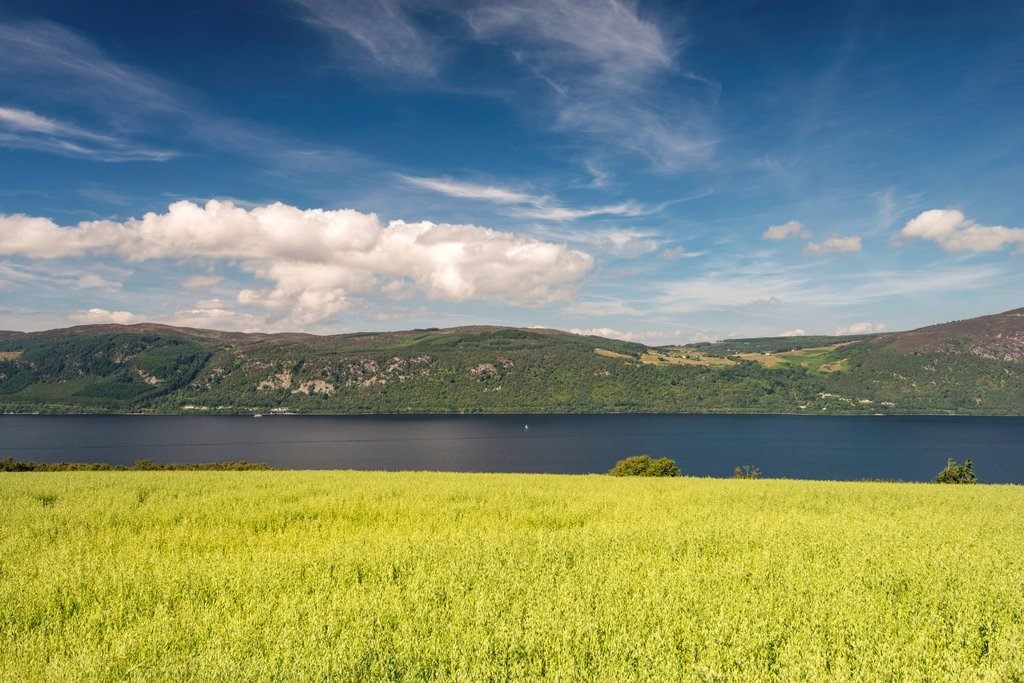 View over an oat field towards Loch Ness, North West Highlands, Scotland, United Kingdom, Europe : Stock Photo