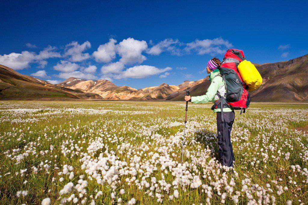 Woman trekking, Landmannalaugar, Iceland, Europe : Stock Photo