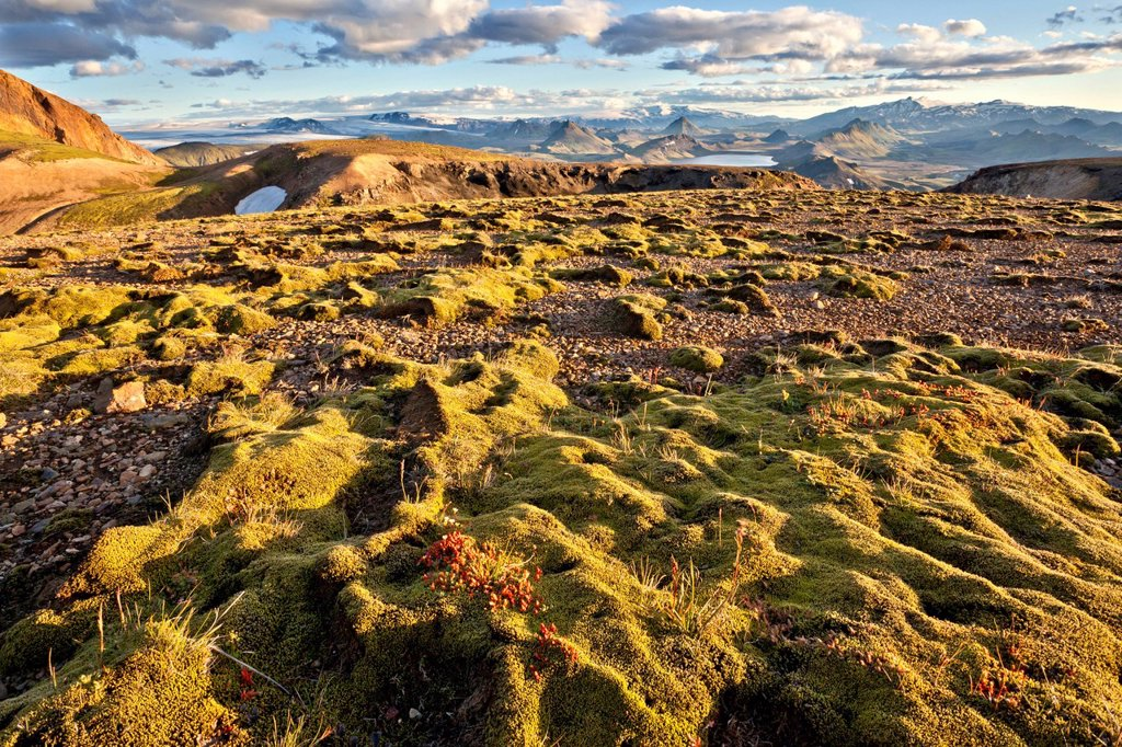 Stock Photo: 1848-754810 Moss landscape with Lake Álftavatn, Laugavegur, Iceland, Europe