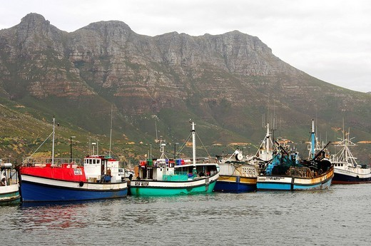 Boats in the harbour at Hout Bay, South Africa : Stock Photo