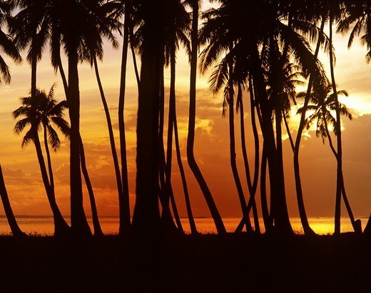 Stock Photo: 1848-78184 Beach with palm trees at sunset, Moorea, French Polynesia, South Pacific, Oceania