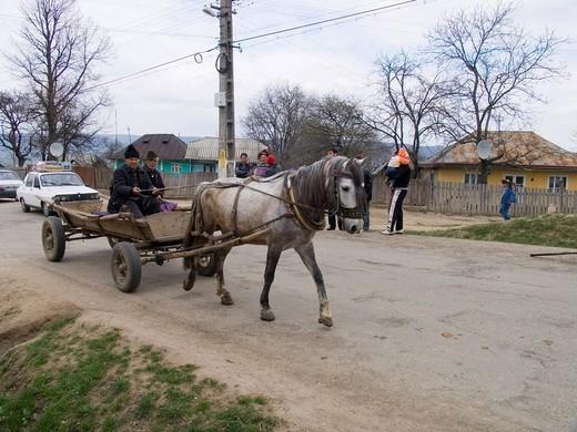 Stock Photo: 1848-81527 Horse carriage, Gulia, Romania