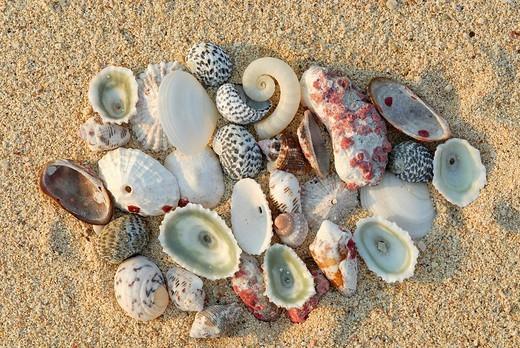 Seashells in the sand, Giron Playa Larga beach, Cuba, Caribbean : Stock Photo