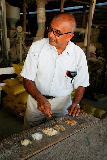 Stock Photo: 1848-8315 Man of Indian ethnicity displaying grain varieties used in the production of pasta at a pasta factory in Demerara Province, Guyana, South America