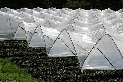 Stock Photo: 1848-91660 Foil beds for strawberries, South Tyrol, Italy