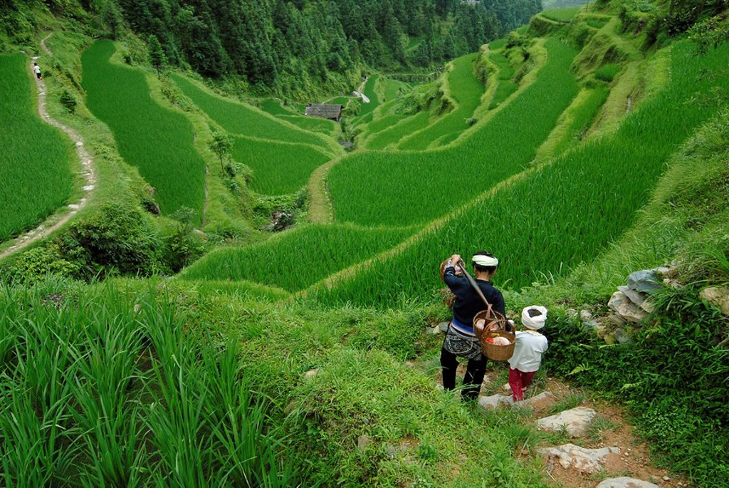 Dong woman and child, minority people, working in rice paddy, Tang An, Guizhou, Southern China, China, Asia : Stock Photo