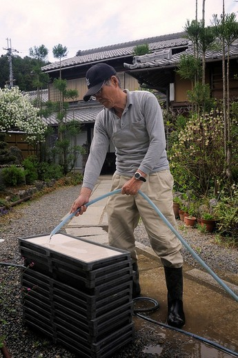 Stock Photo: 1848-93125 Man watering artificial seeding mats for rice grains before they come into the incubator, Iwakura, Japan, East Asia, Asia