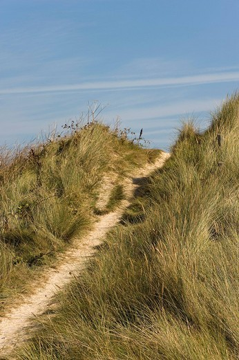 Stock Photo: 1848-93231 Path through the dunes at Kerbrat, Cleder, Finistere, Brittany, France, Europe