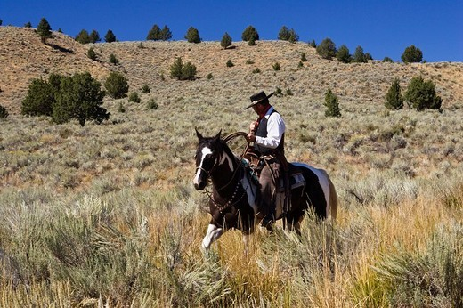 Cowboy riding, Oregon, USA : Stock Photo