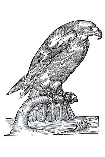 Woodcut, sea eagle Haliaeetus, from: Conrad Gesner, Historia Animalum, 1551, Germany, Europe : Stock Photo