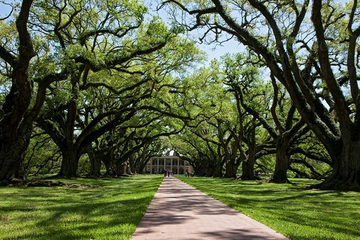 Stock Photo: 1848-96928 The restored Oak Alley Plantation, Vacherie, Louisiana, USA, North America