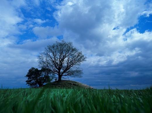 Stock Photo: 1848-98087 Tree growing on a tumulus, barrow or burial mound beneath a cloud scattered sky, Zudar, Ruegen Island, Mecklenburg_Western Pomerania, Germany, Europe