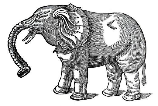 Stock Photo: 1848-98577 Woodcut, Elephant, Conrad Gesner, Historia animalium, 1551, Renaissance