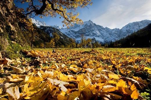 Stock Photo: 1848-98637 Grosser Ahornboden, Large Maple Valley, in front of Spritzkarspitze peak, Karwendel Range, North Tyrol, Austria, Europe