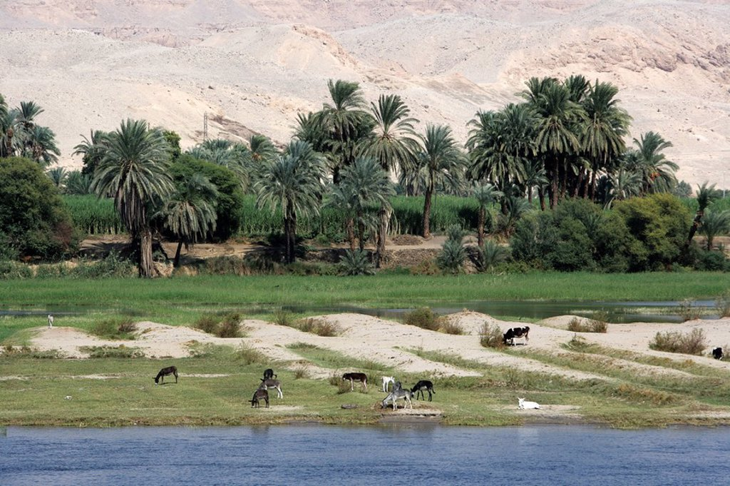 The Nile between Luxor and Esna, Egypt, Africa : Stock Photo